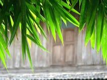Feuilles de bambou avec le fond en bois Photographie stock