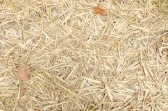 Feuilles de bambou de fond. Photo libre de droits