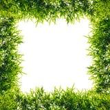 Feuilles de bambou de vue d'isolat Image stock