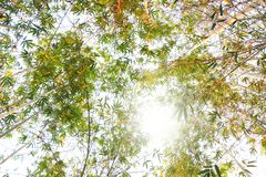 Feuilles de bambou sur le fond blanc Photo libre de droits