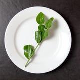 Feuilles de bergamote dans le plat photos libres de droits