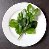 Feuilles de bergamote dans le plat blanc Image stock