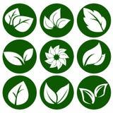 Feuilles de blanc sur un bouton vert rond Image libre de droits
