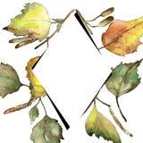 Feuilles de bouleau vert et jaune d'automne Feuillage floral de jardin botanique d'usine de feuille Place d'ornement de frontière illustration stock