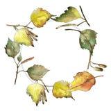 Feuilles de bouleau vert et jaune d'automne Feuillage floral de jardin botanique d'usine de feuille Place d'ornement de frontière illustration libre de droits