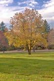 Feuilles de bout de la saison Portland OU photos libres de droits