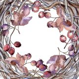 Feuilles de cadre d'aubépine dans un style d'aquarelle Photos libres de droits