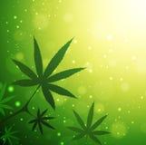 Feuilles de cannabis Photographie stock libre de droits