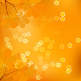 Feuilles de châtaigne d'automne Photo stock