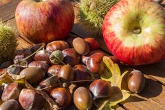 Feuilles de châtaignes, de cosses, de pomme, de gland et de chêne Images libres de droits