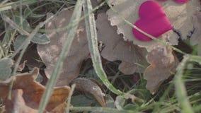 Feuilles de chêne avec le coeur Matin givré banque de vidéos