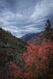 Feuilles de chêne rouge et ciel orageux Images libres de droits