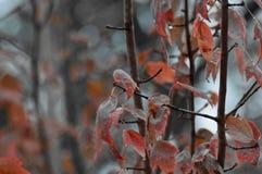 Feuilles de chute avec le fond magnifique photographie stock libre de droits