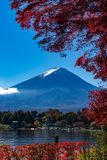 Feuilles de chute d'Autumn Fuji images stock
