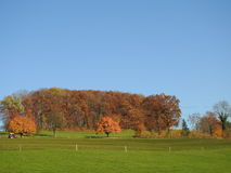 Feuilles de chute dans l'arbre Images libres de droits