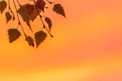 Feuilles de chute dans le coucher du soleil Photographie stock