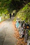 Feuilles de chute ou d'automne sur le plancher et les bicyclettes se garant sur un chemin Image stock