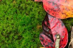 feuilles de chute sur le fond vert - mousse Images libres de droits