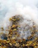 Feuilles de combustion lente Photographie stock