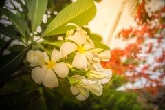 Feuilles de fleur blanche et de vert sur la lumière du soleil Image stock