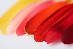 Feuilles de fleur de couleur d'arc-en-ciel Images libres de droits