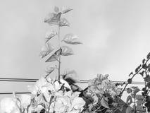 Feuilles de fleur et modèle de fond de pétale photo libre de droits