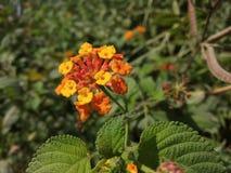 Feuilles de fleurs photos libres de droits