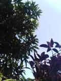 Feuilles de fleurs de cuvette de ciel images libres de droits