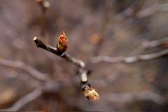 Feuilles de floraison sur un arbre images libres de droits