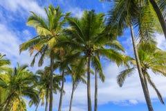 Feuilles de fond de paume en Hawaï, Etats-Unis Image stock