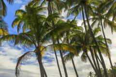Feuilles de fond de paume en Hawaï, Etats-Unis Photo stock