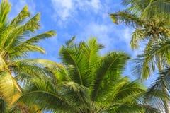 Feuilles de fond de paume en Hawaï, Etats-Unis Images stock