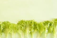 Feuilles de fond vert clair de laitue photographie stock libre de droits