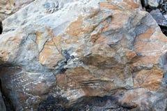 Feuilles de fossile sur une roche Images libres de droits