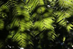 Feuilles de fougère dans l'éclairage Photo stock