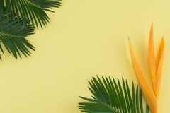 Feuilles de fougère et oiseau de fleur de paradis sur le fond jaune en pastel Photos libres de droits