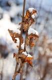 Feuilles de gâchette en hiver photo stock