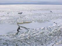 Feuilles de glace criquées Images libres de droits