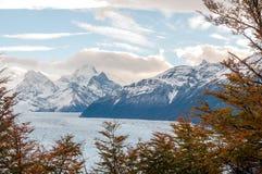 Feuilles de hêtre contre la montagne Images stock