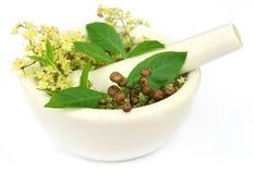 Feuilles de henné avec la fleur et les graines Photo stock