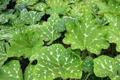 Feuilles de jardin. Images stock