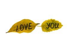 Feuilles de jaune avec l'amour d'inscription vous isolat Image stock
