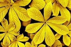 Feuilles de jaune d'automne Photographie stock libre de droits