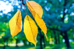 Feuilles de jaune d'automne Photos stock