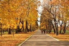 Feuilles de jaune d'automne en parc Photos stock