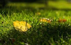 Feuilles de jaune d'automne en parc Images stock