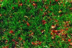 Feuilles de jaune d'automne sur une herbe Photographie stock libre de droits