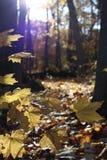 Feuilles de jaune en automne Photo stock