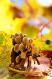 Feuilles de jaune et cône de pin photo stock