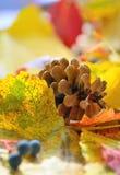 Feuilles de jaune et cône de pin photos libres de droits